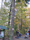 Obrázek: Den stromů 2012 030.jpg