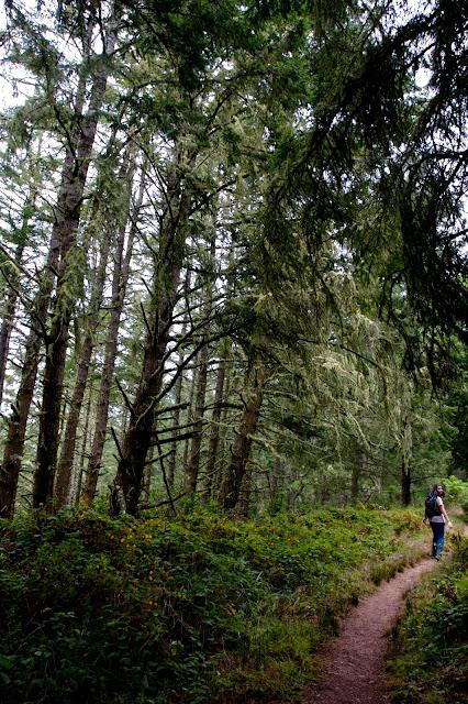 coastal pine forest