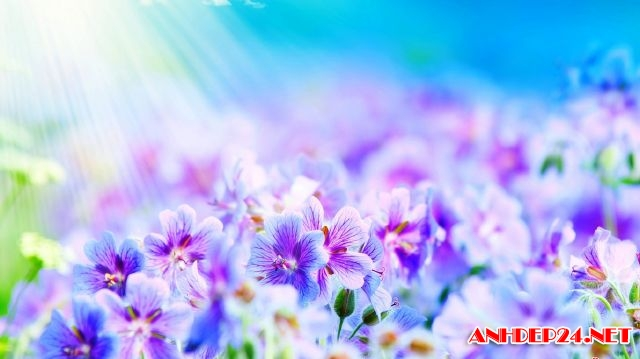 Hình nền tết 2017 với bộ sưu tập hoa cỏ mùa xuân