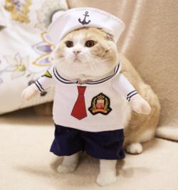 quần áo cosplay 3D đẹp cute cho chó mèo