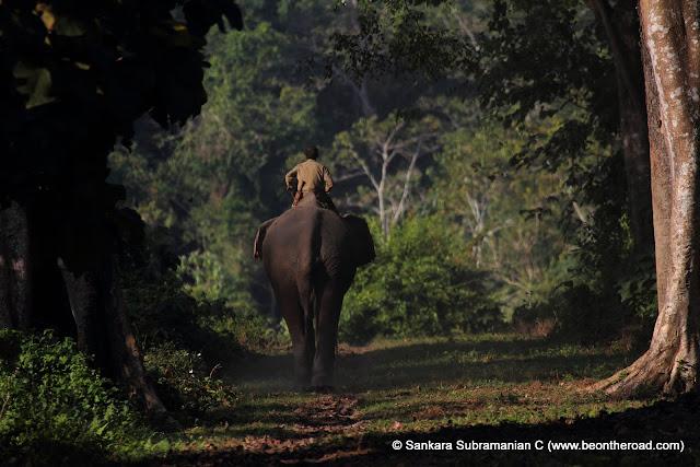 A Jumbo Safari