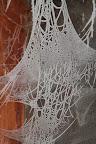 DENTELLE     Toiles d'araignées givrées contre une vitre en extérieur