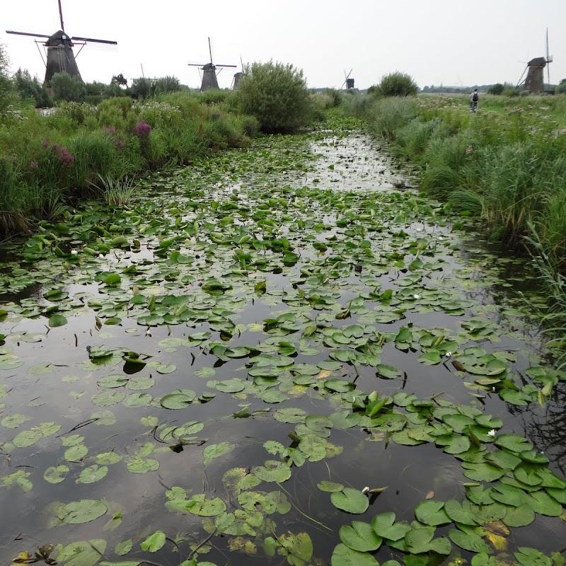 Day_6_Kinderdijk_21.JPG