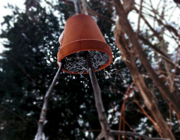 Vogelbeisl oder vogelfutter selbermachen diy for Fliegen aus blumentopf