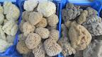 Sponges for sale in Vathi (Kalmnos)