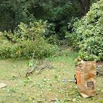 Fallen Tree The Prado