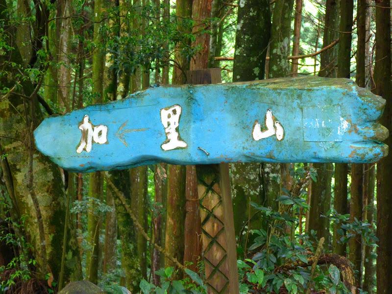 Petite randonnée au sud de Taufen, dans la région de Miaoli - P1330581.JPG