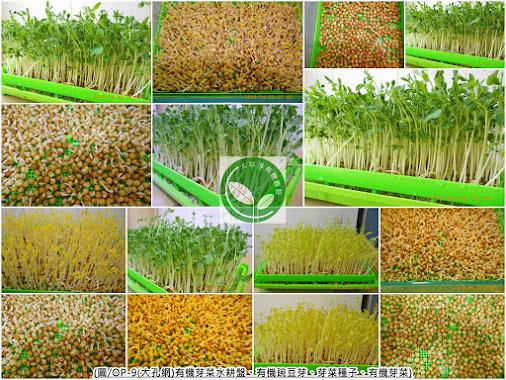 豌豆,荷蘭豆,荷蘭豆子,豌豆料理,荷蘭豆食譜,荷蘭豆料理,豌豆種類,豌豆苗功效,豌豆嬰生吃,豌豆嬰沙拉