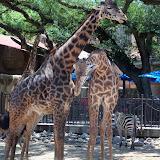 Houston Zoo - 116_8560.JPG