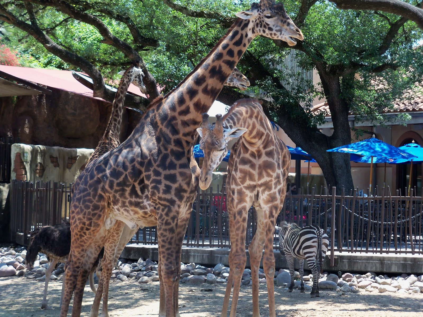 Houston Zoo - 116_8560.JPG