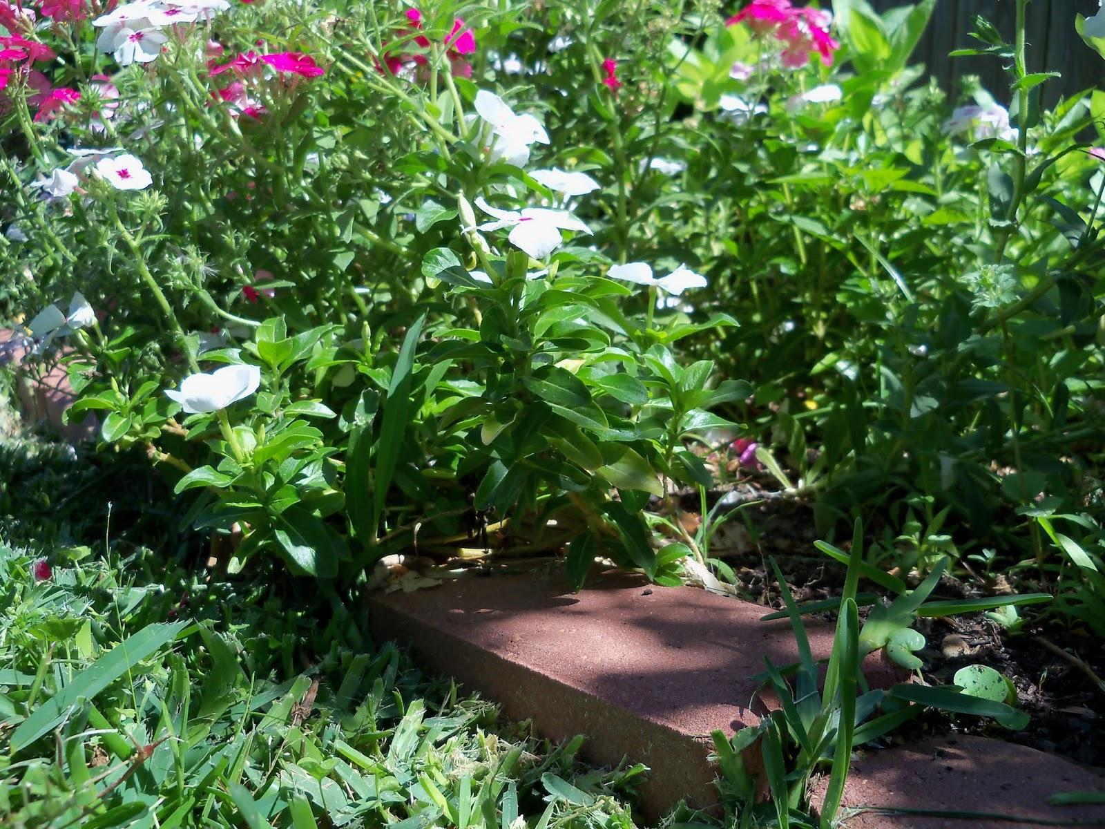 Gardening 2013 - 115_6258.JPG