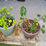 Gardening 2015 - 116_7688.JPG