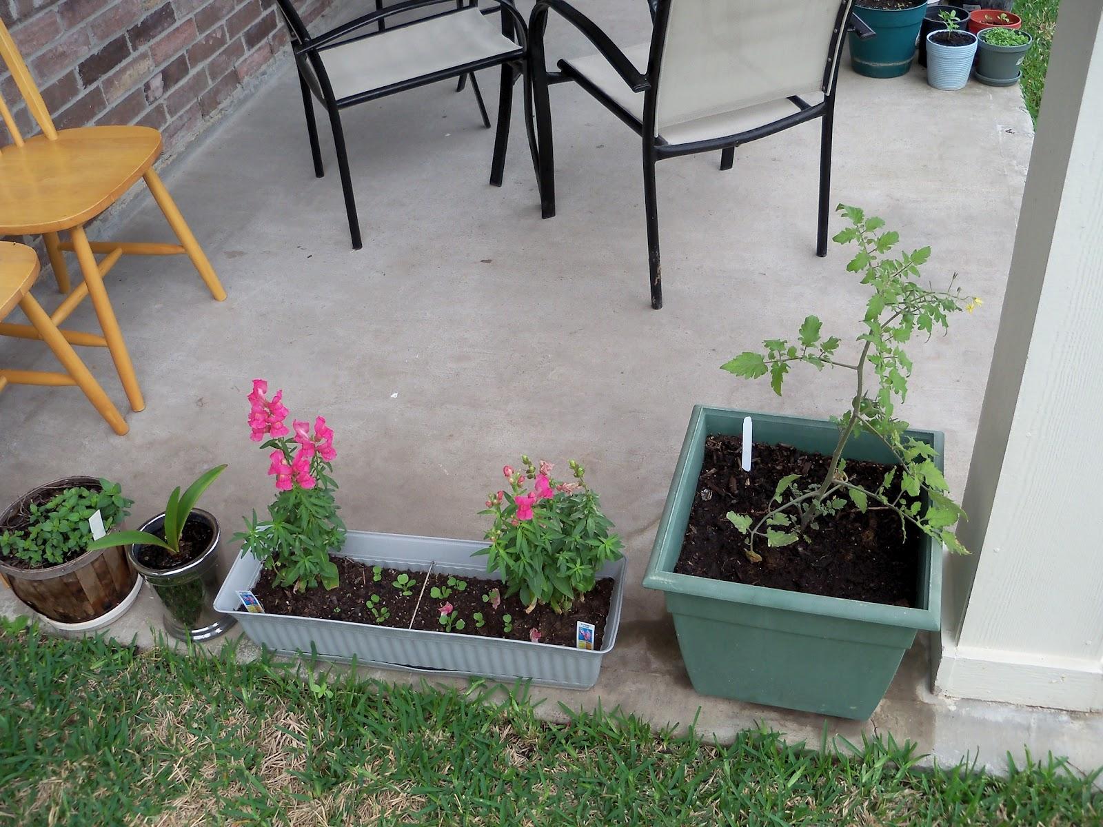 Gardening 2011 - 100_7208.JPG