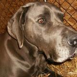 True Blue...as he grew - HPIM3762.JPG