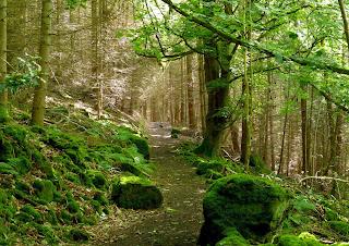Trefor Woods, Near Llangollen