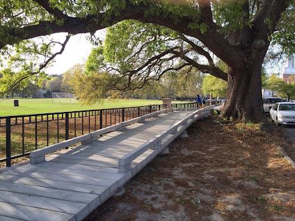 Image result for sidewalk bridge tree roots