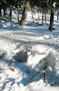 deer bedding sites.jpg