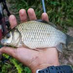 20140813_Fishing_Sergiyivka_004.jpg