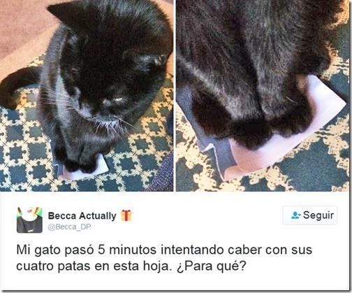 humor twits de gatos (5)