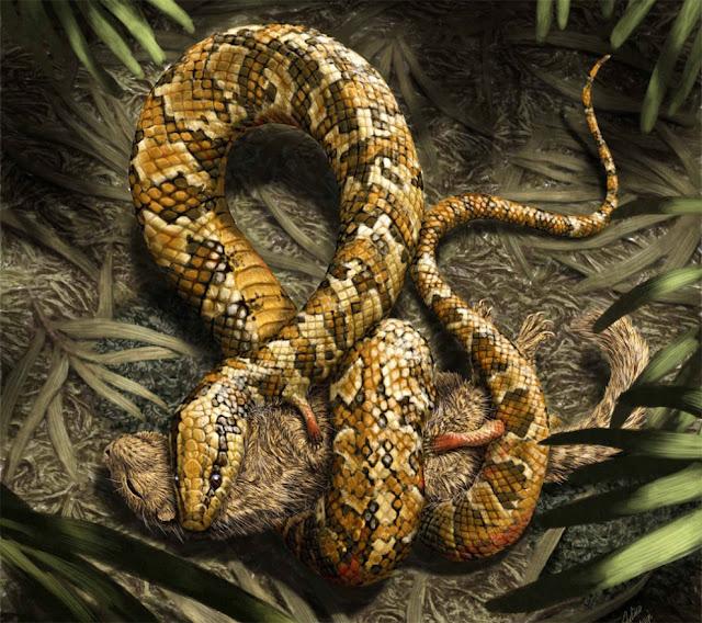 Fosil nenek moyang ular berkaki empat ditemukan