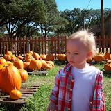 Pumpkin Patch - 114_6568.JPG