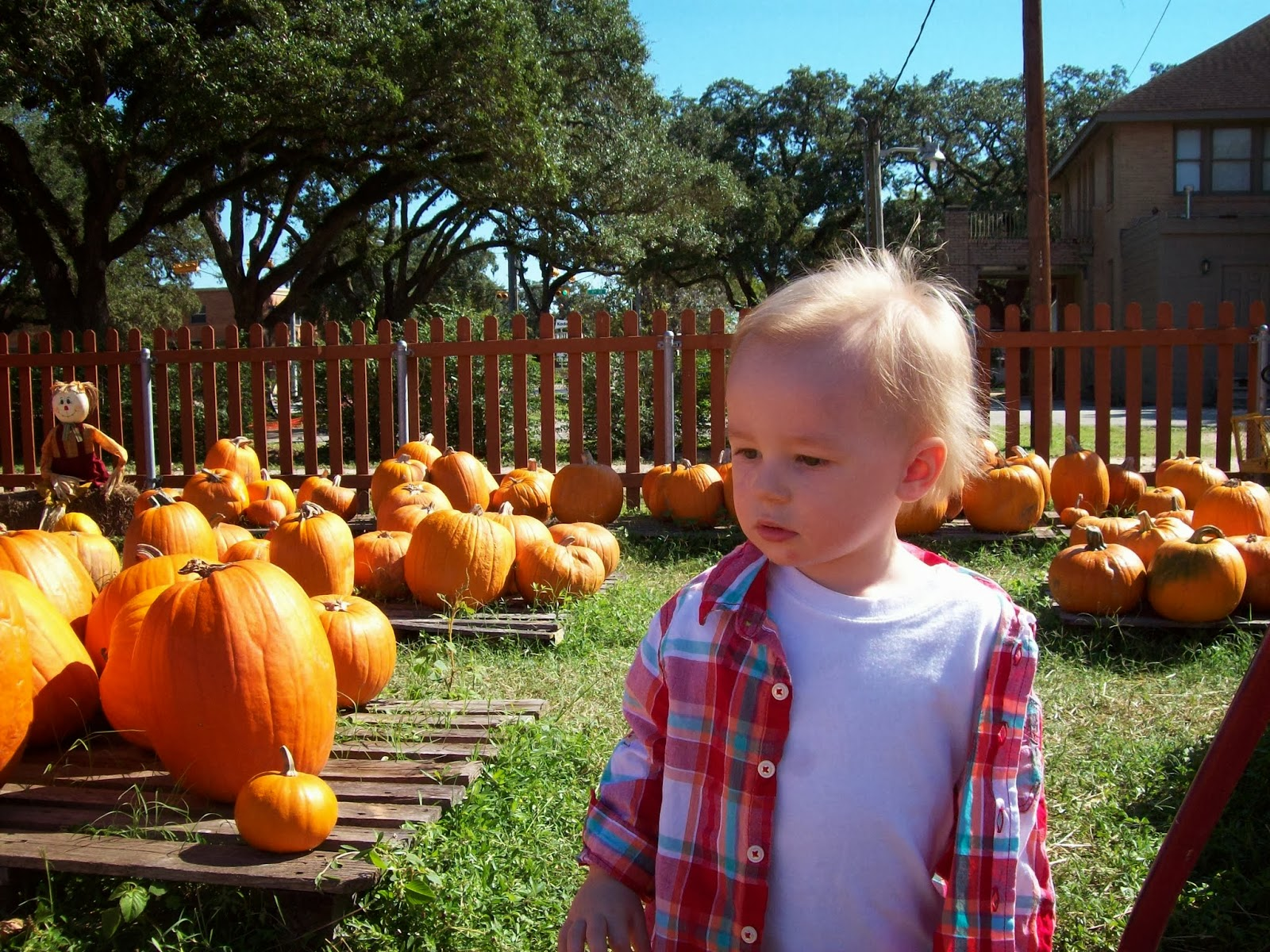 Pumpkin Patch - 114_6568.JPG