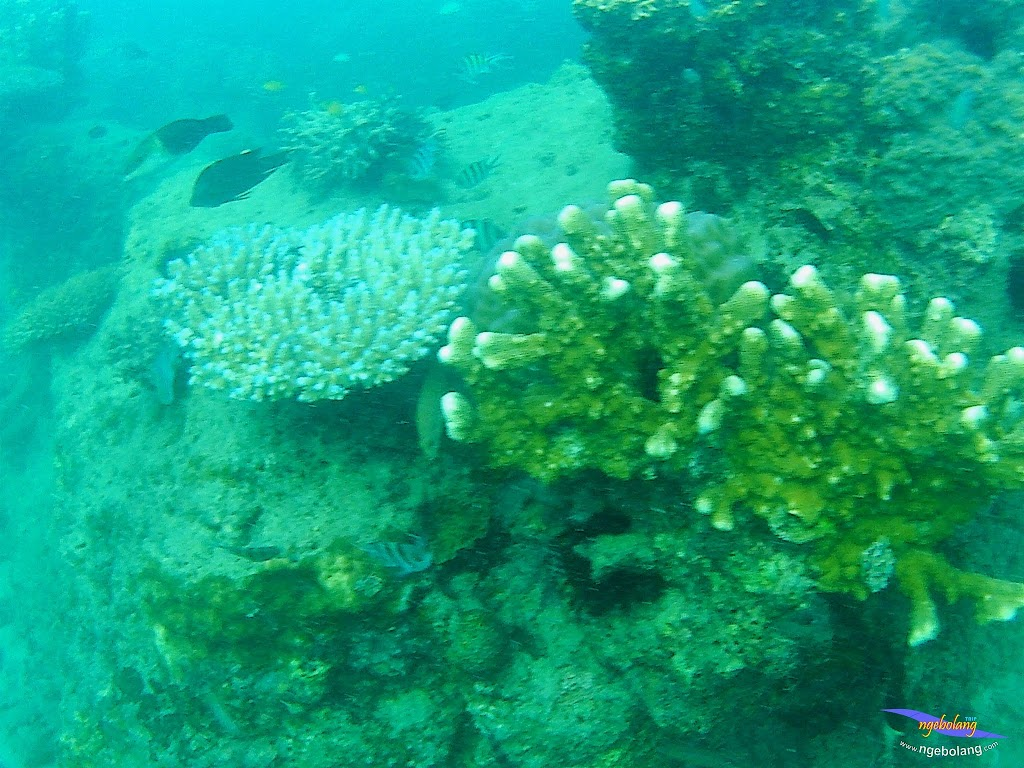 family trip pulau pari 090716 GoPro 48