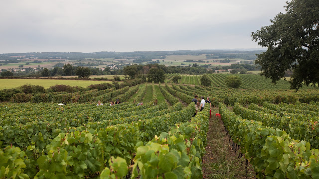 2013 vendanges du chardonnay - 2013%2B09%2B28%2BGuimbelot%2Bvendanges%2Bdu%2BChardonnay%2B121.jpg