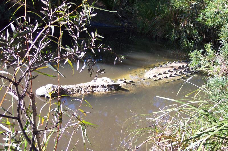 Questões e Fatos sobre Crocodilianos gigantes: Transferência de debate da comunidade Conflitos Selvagens.  - Página 2 411608126CIktFm_ph