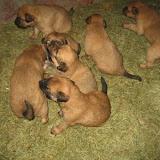 fotos caninas 235.jpg