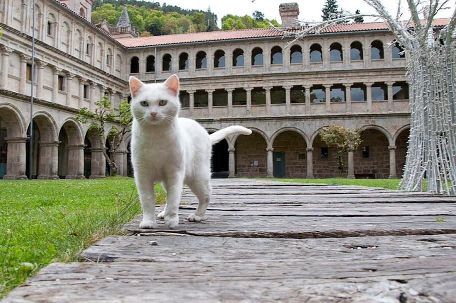 Un gato blanco en un claustro medieval