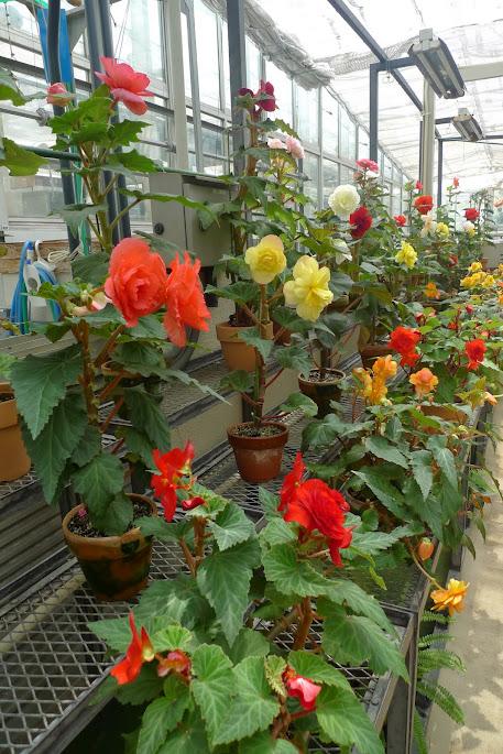 chofu jardin botanique jindaiji