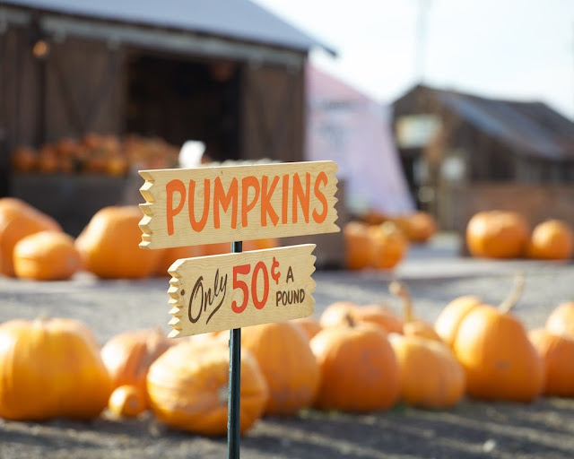 Adobe Pumpkin Farm