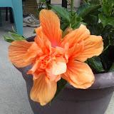 Gardening 2014 - 0406095017.jpg