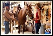 Horses Supplies