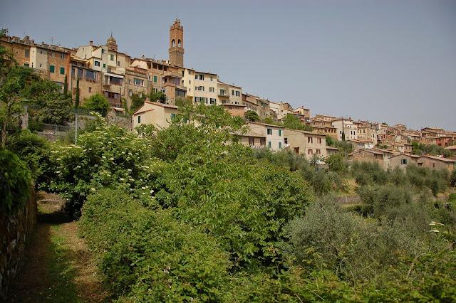 Panorama view of Montalcino with elderflowers in May