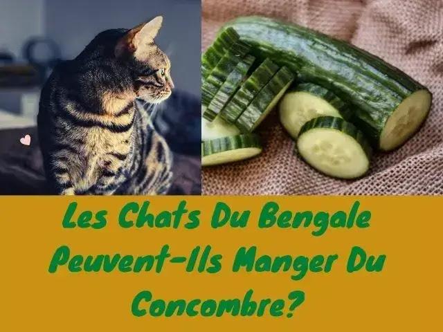 Les Chats Du Bengal Peuvent-Ils Manger Du Concombre?