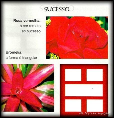 O-baguá-e-as-plantas-06