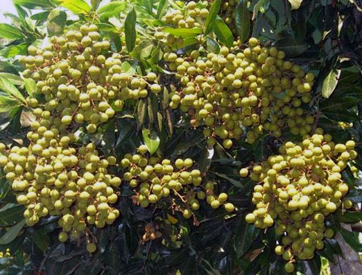 dwisangpetani.blogspot.com