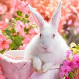 White easter bunny rabbit in a basket in a flower garden scene.