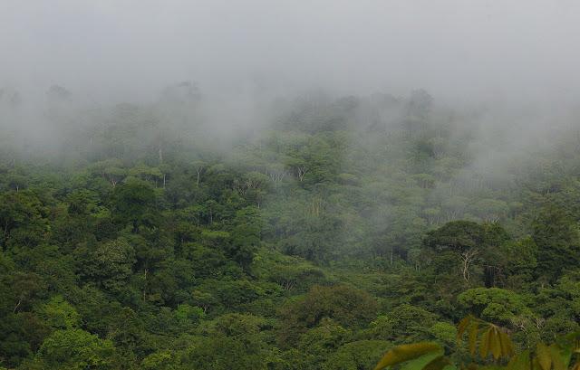 La forêt, le matin, près de Cacao (Guyane). 27 novembre 2011. Photo : J.-M. Gayman