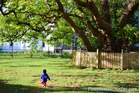 How to Teach a Toddler About Trees