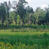 Anderson Creek 2015 - DoveHuntAndersonCreek2015-001.jpg