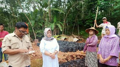 Menuju Kedaulatan Pangan, Istri Ketua DPRD Ciamis Demonstrasikan Tanam Padi Dipolybag