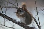 NOISETTES SAUCE CHAMPIGNON Cette forêt incendiée est riche en champignons? et en écureuils !
