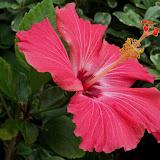 Gardening 2011 - 100_7248.JPG
