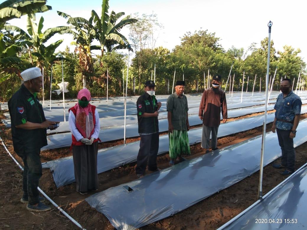 Alumni Sertifikasi Fasilitator Organik Maros Sulap Lahan Tidur Jadi Lahan Cabai Organik