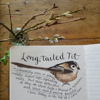 Long Tailed Tit :: www,AliceDrawsTheLine.co.uk
