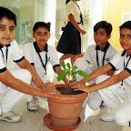 Plantation Activity (Grade 6) 5-7-2014