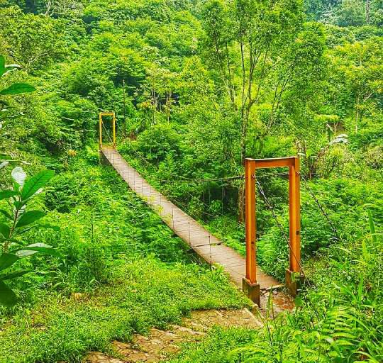 Jembatan goyang taman hutan raya juanda